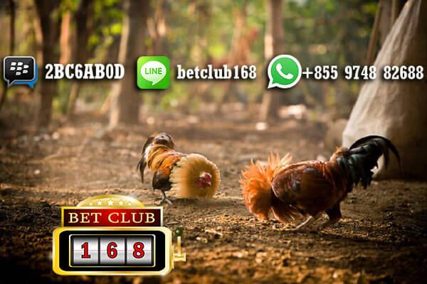Agen Ayam Online Terpercaya dan Terbesar Asia