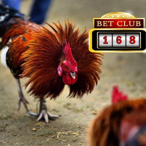 Agen Sabung Ayam Bangkok Depo 25 Ribu