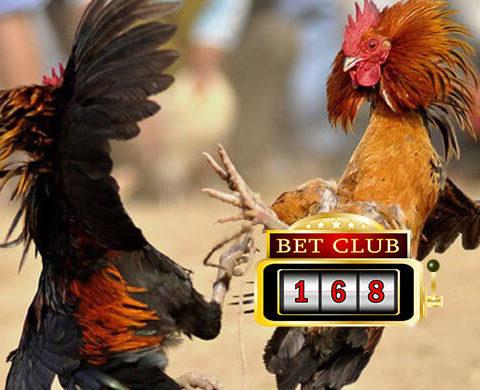 Daftar Akun Sabung Ayam Uang Asli Bonus Kemenangan