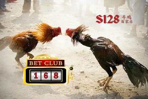 Sabung Ayam S1288 Live Betting 20 Ribu
