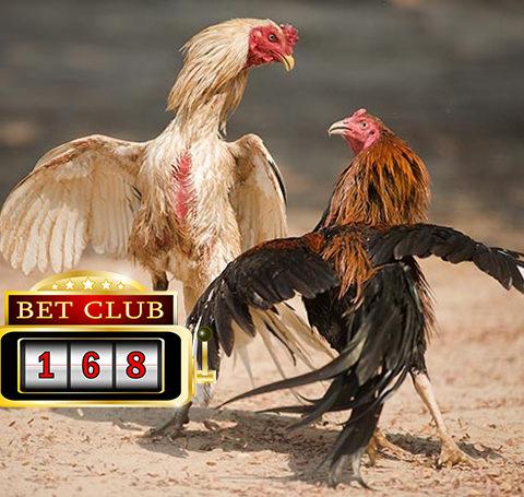 Situs Sabung Ayam Bonus Terbesar 2019