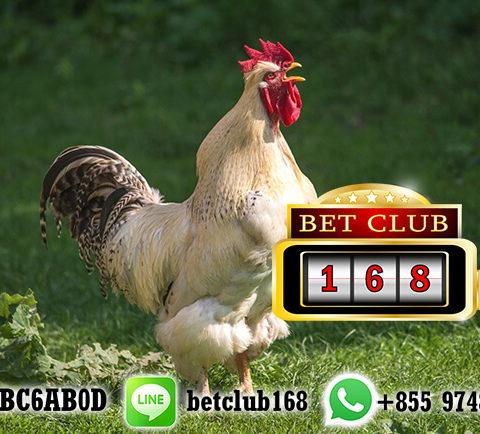 Banyak Withdraw Main Sabung Ayam Online