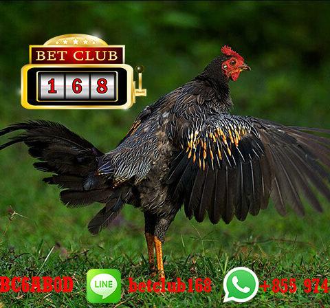 Sabung Ayam S128 Live Online Android Bonus Besar