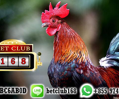 Situs Taruhan Sabung Ayam Online Deposit Termurah
