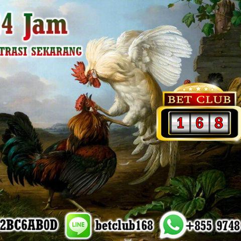 Agen Sabung Ayam Terpercaya 24 Jam Pendaftaran Gratis