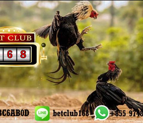 Daftar Akun Sabung Ayam Bank BNI Online 24 Jam