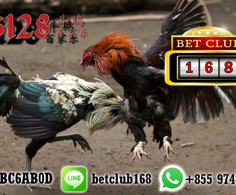 Download Aplikasi Sabung Ayam S128 Live APK