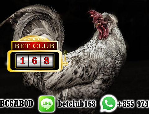 Judi Sabung Ayam Online Bonus New Member