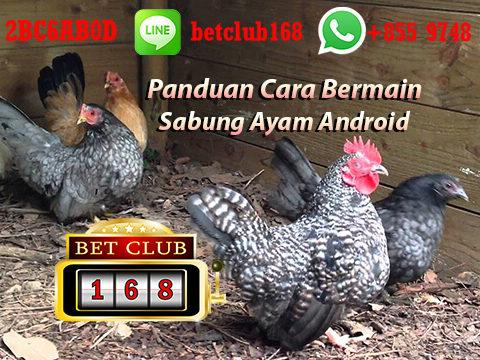 Panduan Cara Bermain Judi Ayam Online Uang Asli - BETCLUB168