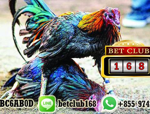 Beberapa Promo Bonus Sabung Ayam Menguntungkan