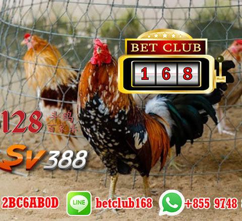 Game Ayam Online Pengusir Jenuh Paling Menguntungkan