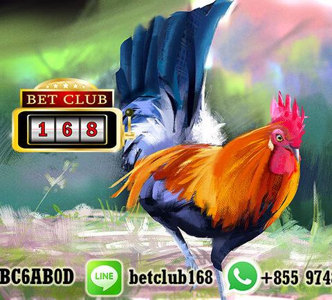 LiveChat Agen Sabung Ayam Terpercaya Proses Cepat