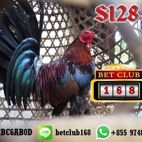 S128 Situs Sabung Ayam Tampilan Live Terbaik 24 Jam