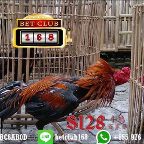 Link Alternatif Situs Sabung Ayam Terpercaya Indonesia