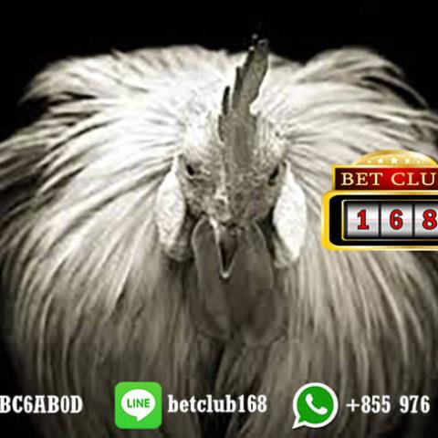 Promo Bonus Taruhan Adu Ayam Online Android