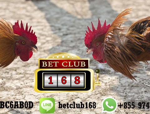Situs Laga Sabung Ayam Online Terpercaya 2019