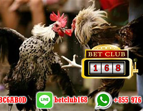 Situs Sabung Ayam S128 Terpercaya Bonus Besar