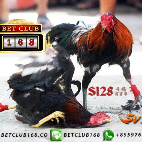 Agen Judi Ayam Online Bonus Lebaran 2019