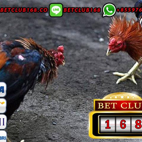 Langkah Mudah Bermain Sabung Ayam Versi Android