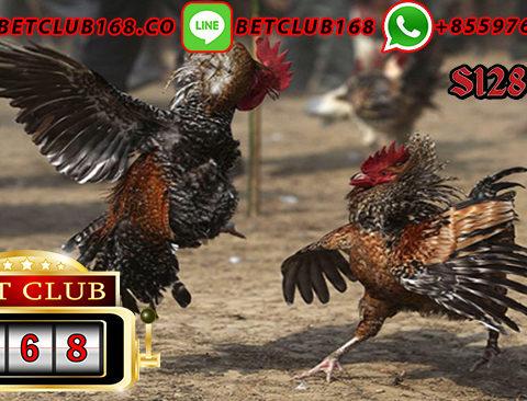 Situs Adu Ayam Teraman 24 Jam