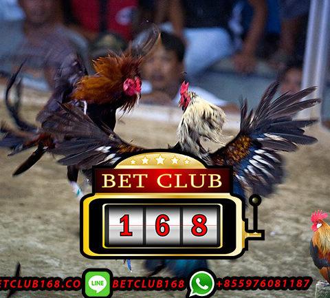 Situs Sabung Ayam Bonus Besar Lebaran 2019
