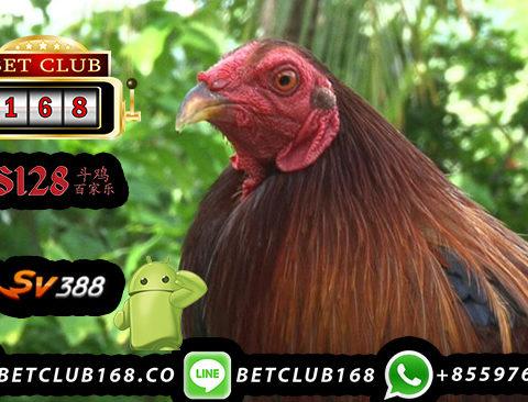 Taruhan Sabung Ayam Deposit 25 Ribu Termurah