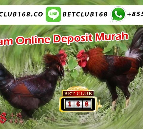 Adu Ayam Online Deposit Murah