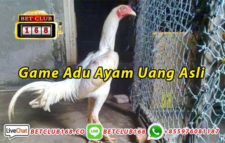 Game Adu Ayam Uang Asli