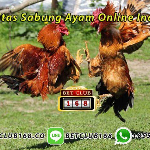 Komunitas Sabung Ayam Online Indonesia